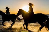 kurs jazdy konnej